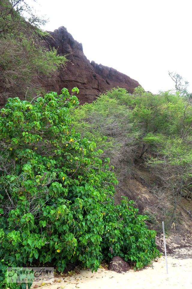 Lava formations behind Makena's Big Beach in Maui, Hawaii | funkyjunkinteriors.net