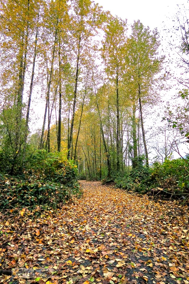 Fall bike ride trail near the river | funkyjunkinteriors.net