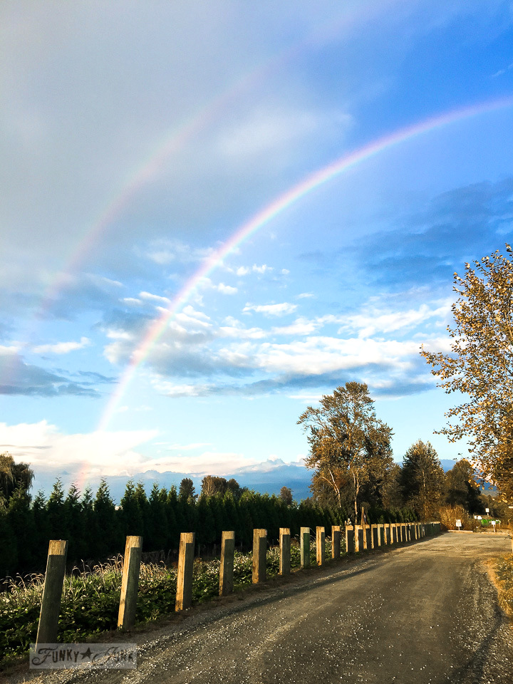 double rainbow against a very blue sky during golden hour | funkyjunkinteriors.net