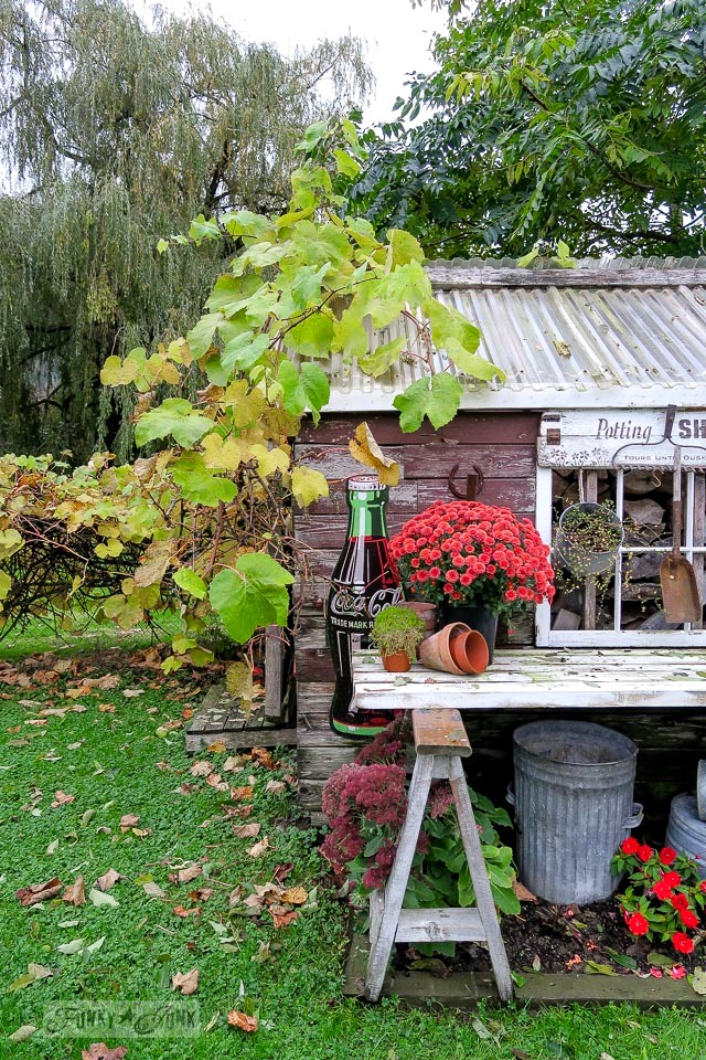 Rustic garden shed with sawhorse potting bench decorated with with mums and fall leaves | funkyjunkinteriors.net