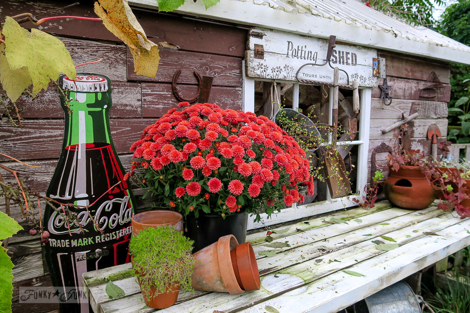 Rustic garden shed with Potting Bench sign, decorated with with mums and fall leaves | funkyjunkinteriors.net
