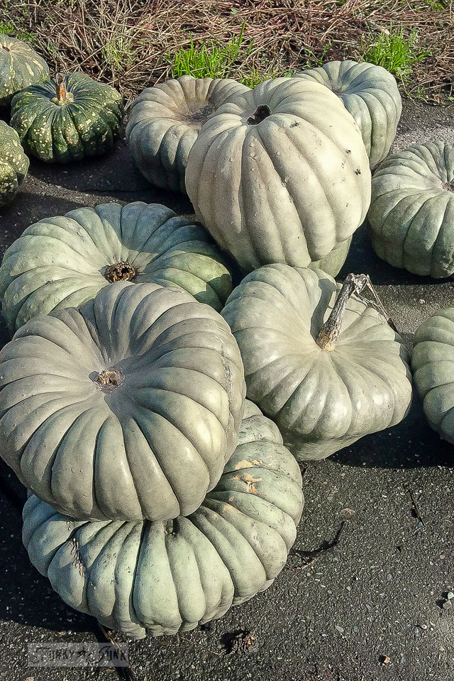 fall-pumpkins-of-all-kinds-001