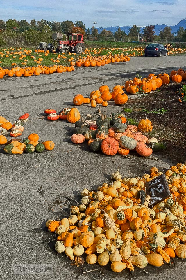 All pumpkins of all kinds, found at a local farm during fall | funkyjunkinteriors.net