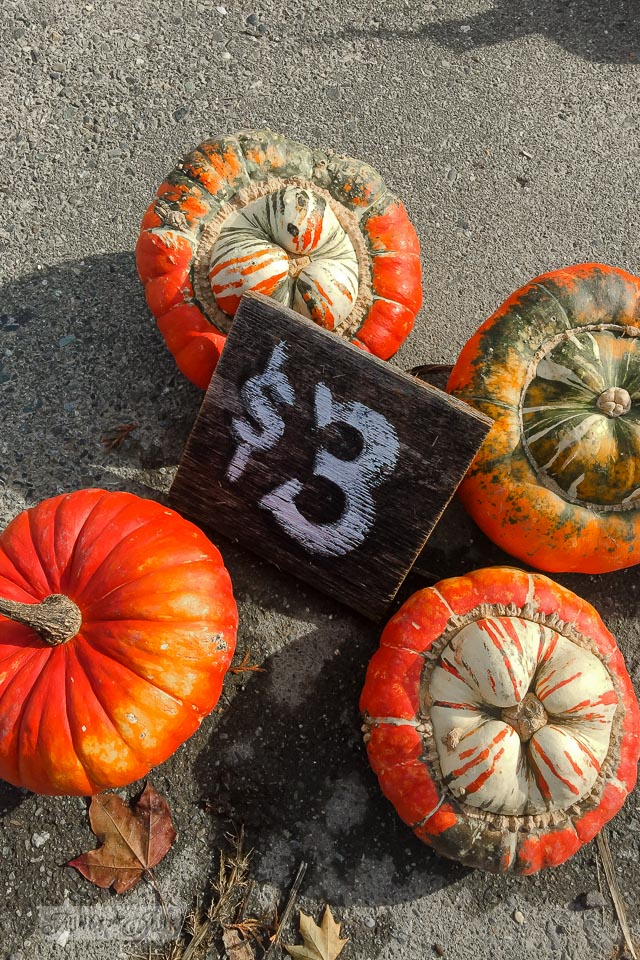 Fancy orange pumpkins with a reclaimed wood rustic $3 sign - plus pumpkins of all kinds, found at a local pumpkin farm for fall decorating | funkyjunkinteriors.net