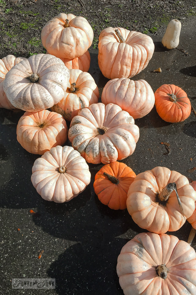 Peach princess pumpkins - plus pumpkins of all kinds, found at a local farm | funkyjunkinteriors.net