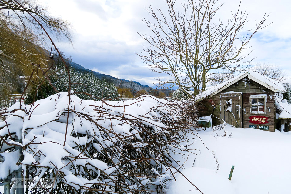 Rustic shed in the snow, trimmed with twiggy grapevines | funkyjunkinteriors.net