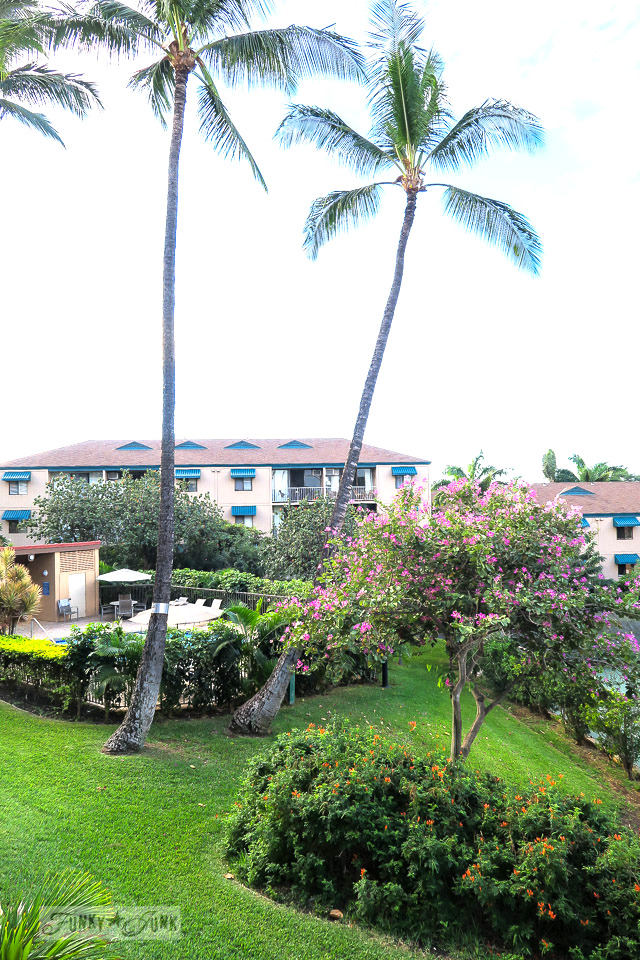 The established grounds of Maui Vista by the pool in Kihei | funkyjunkinteriors.net