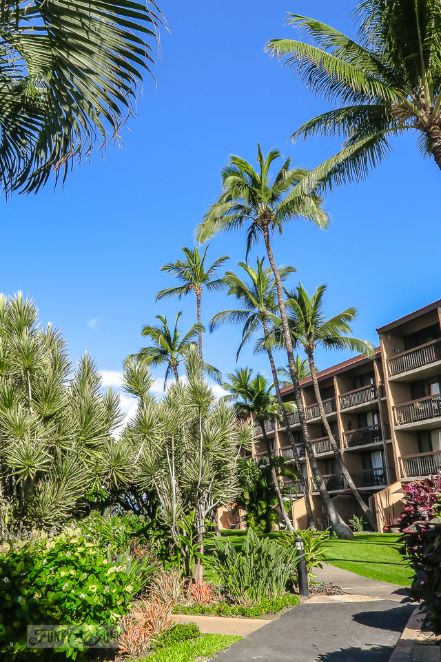 The established grounds of Maui Vista in Kihei | funkyjunkinteriors.net