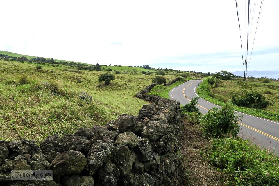 A long lava rock fence along the hilly upcountry backroad to Hana, Maui | funkyjunkinteriors.net