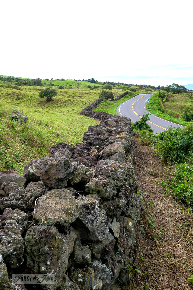 Risking the hilly backroad to Hana and Grandma's House - a windy, pretty photogenic road upcountry Maui tour everyone should see! funkyjunkinteriors.net