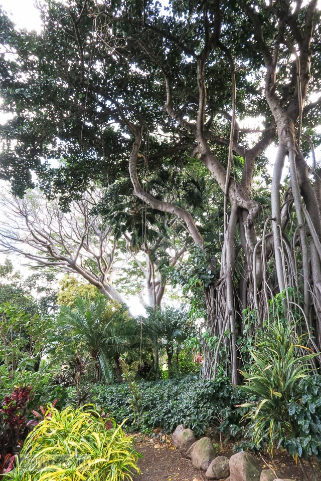 Gorgeous tropical plants and trees at The Mill House in Maui. A dream restaurant for junkers, plus, located at The Maui Tropical Plantation. | funkyjunkinteriors.net