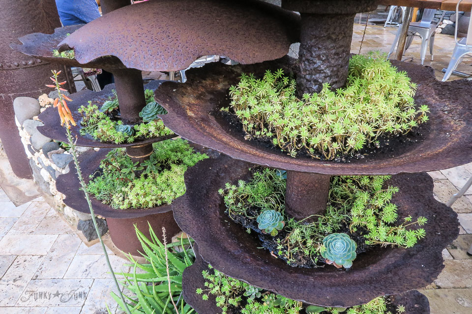 Repurposed succulent blade planters at The Mill House in Maui. A dream restaurant for junkers, plus, located at The Maui Tropical Plantation. | funkyjunkinteriors.net