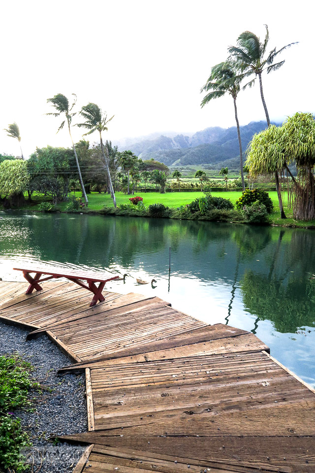 Circular planked walkway along the pond at The Mill House in Maui. A dream restaurant for junkers, plus, located at The Maui Tropical Plantation. | funkyjunkinteriors.net