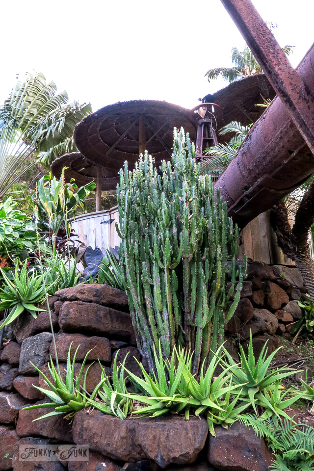 Gorgeous cactus beside a rusty pipe waterfall feature at The Mill House in Maui. A dream restaurant for junkers, plus, located at The Maui Tropical Plantation. | funkyjunkinteriors.net