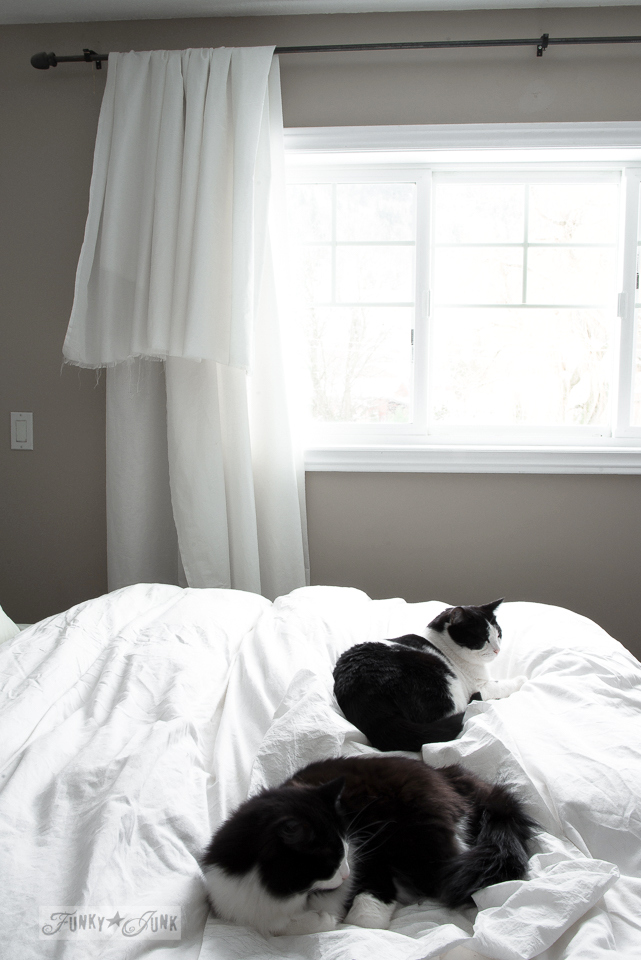 tuxedo cats on a white bed