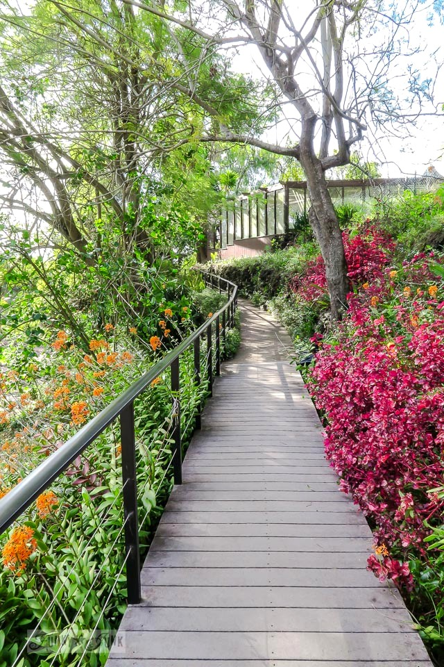 Wooden pathway, with surrounding tropical flowers in full bloom of pink and orange at Kula Botanical Garden, in Maui, Hawaii | funkyjunkinteriors.net