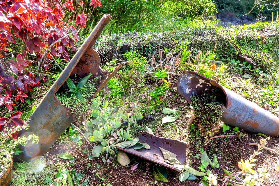 Broken rusty pipes spilling with succulents at Kula Botanical Garden, in Maui, Hawaii | funkyjunkinteriors.net