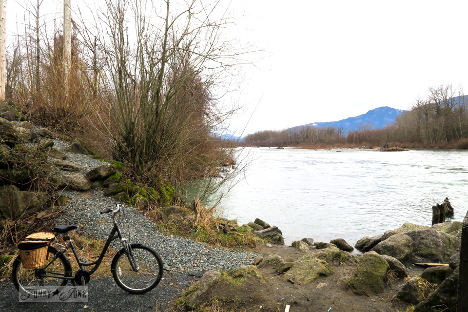 Moody golden growth beside the Vedder River while beating the Feb blues with a winter bike ride | funkyjunkinteriors.net
