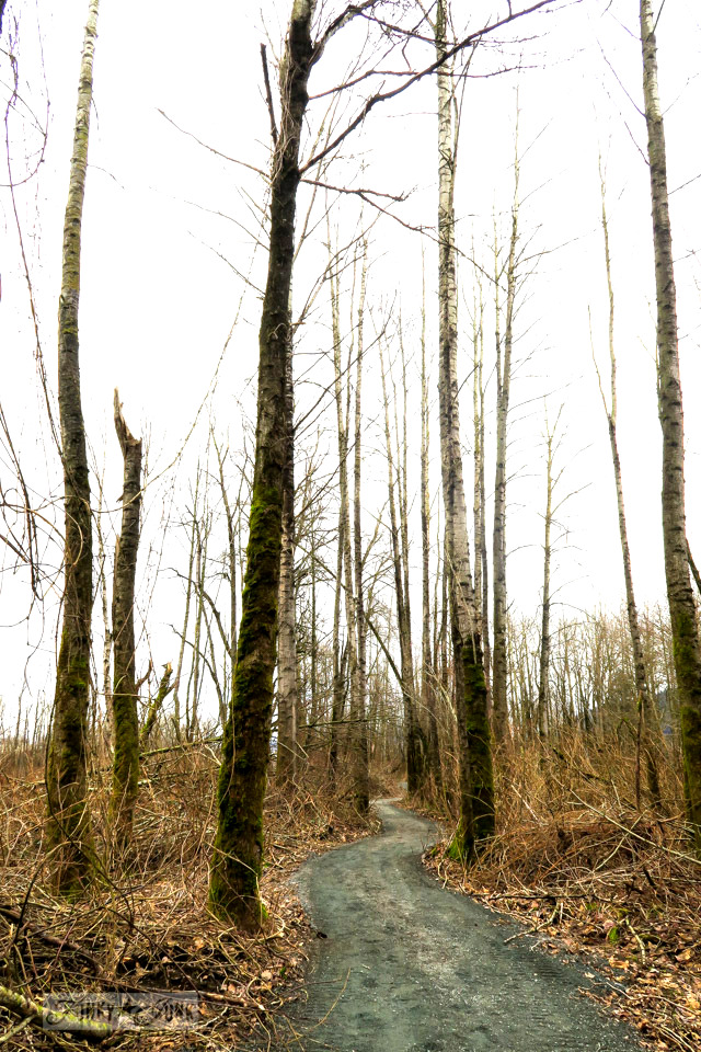 Leafless trees along a bike trail | Beating the Feb blues with a winter bike ride | funkyjunkinteriors.net