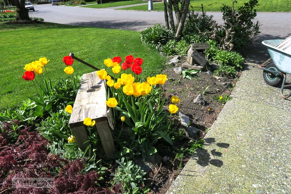Tulip garden before weeding | funkyjunkinteriors.net