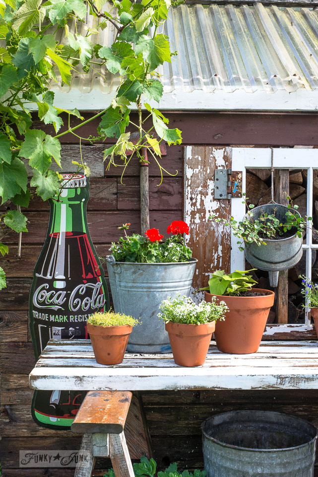 Galvanized funnel and bucket with clay pots all planted with summer flowers for a rustic garden potting shed with a coke bottle sign | funkyjunkinteriors.net