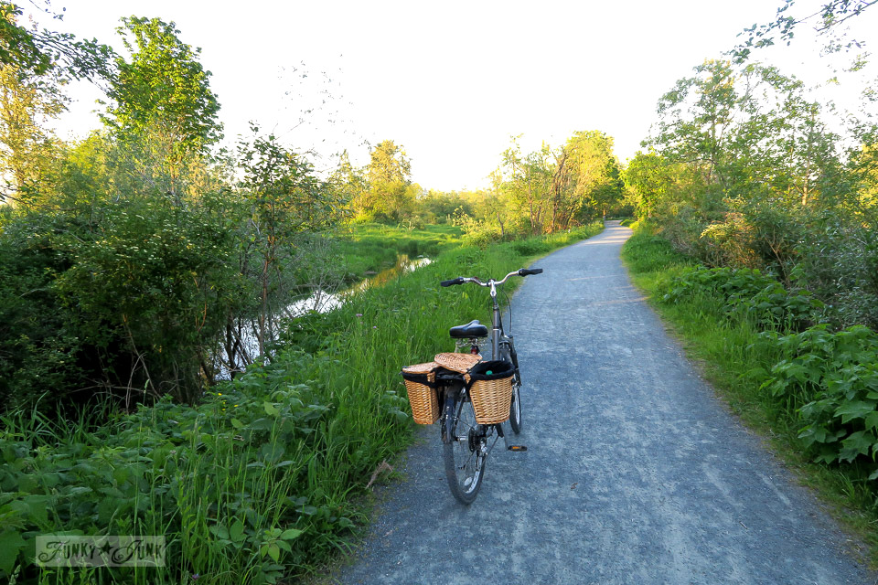 Biking trails along the Vedder River Rotary Trail in Chilliwack, British Columbia, Canada