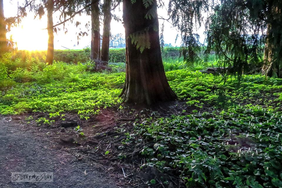 Ground cover illuminates during a sunset in the forest during a bike ride | funkyjunkinteriors.net