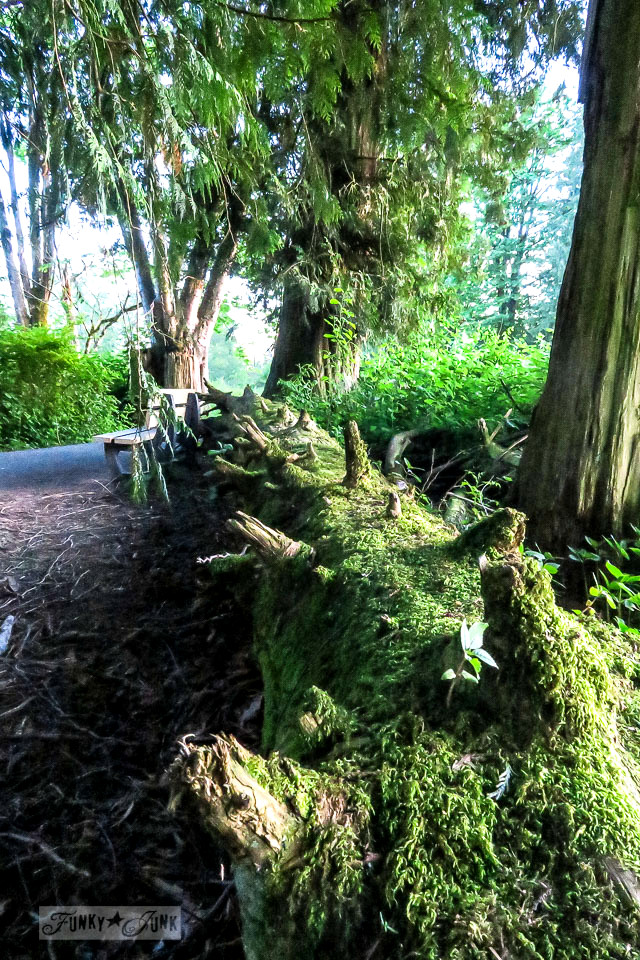 Moss covered log during a trail bike ride through the forest | funkyjunkinteriors.net