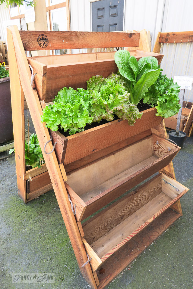 Cedar stacked box planters, from Five Maples Nursery Garden Centre in Abbotsford, BC | funkyjunkinteriors.net
