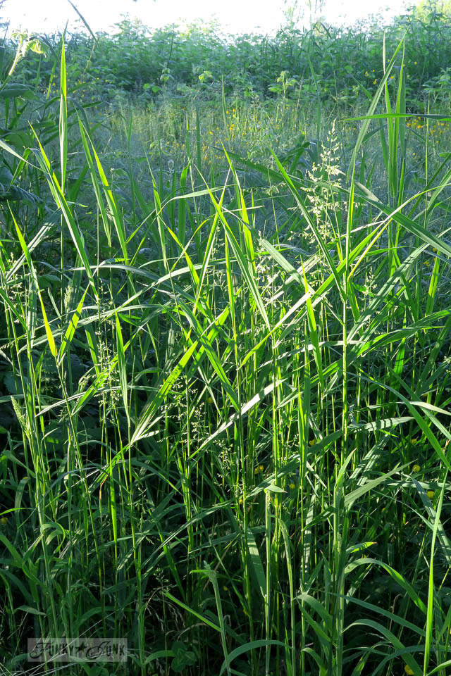 Long tall grass during golden hour during a nature trail bikeride