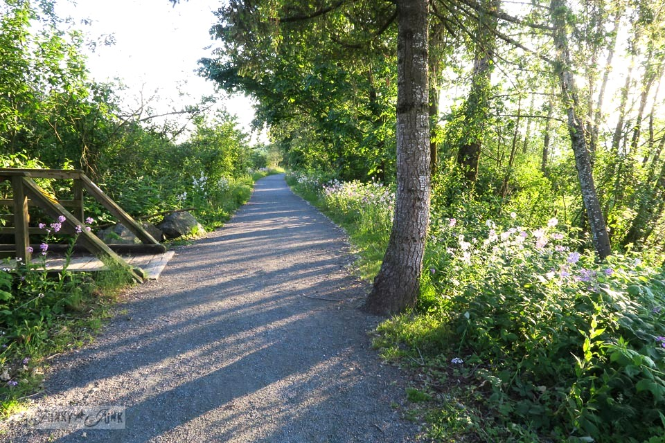 Riverside bike ride trail with wildflowers through a forest in BC Canada