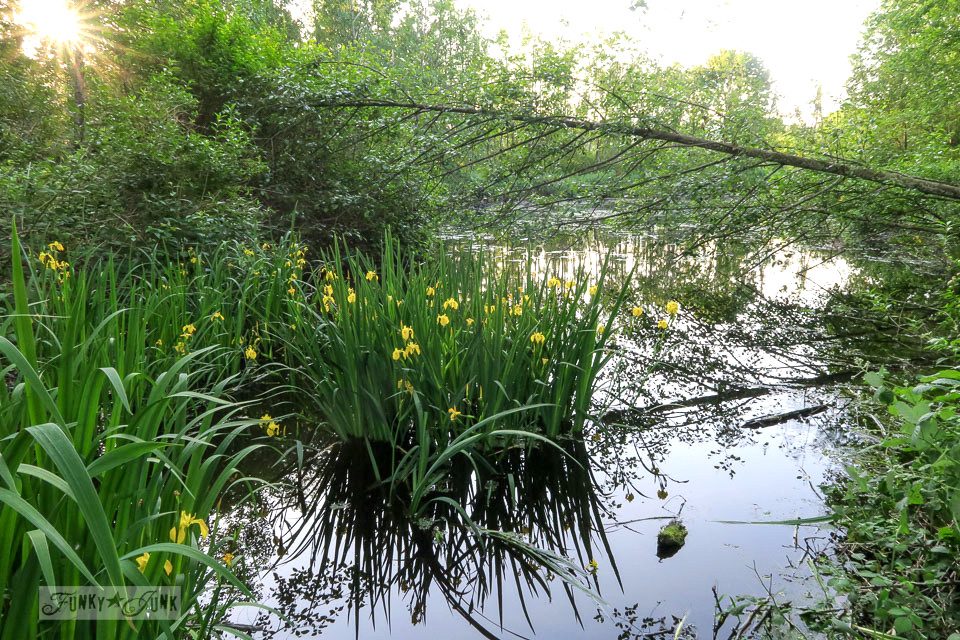 Bike trail pond with flowering water plants