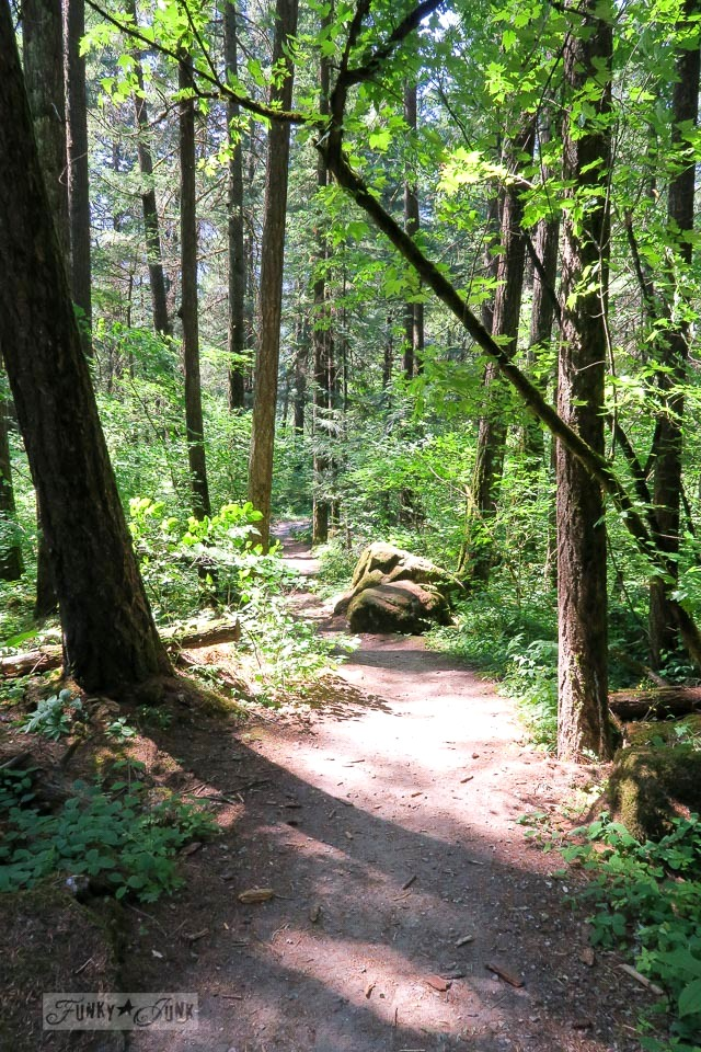 The walking trail to the infamous Alexandria Bridge trail, just outside of Hope, BC Canada | funkyjunkinteriors.net