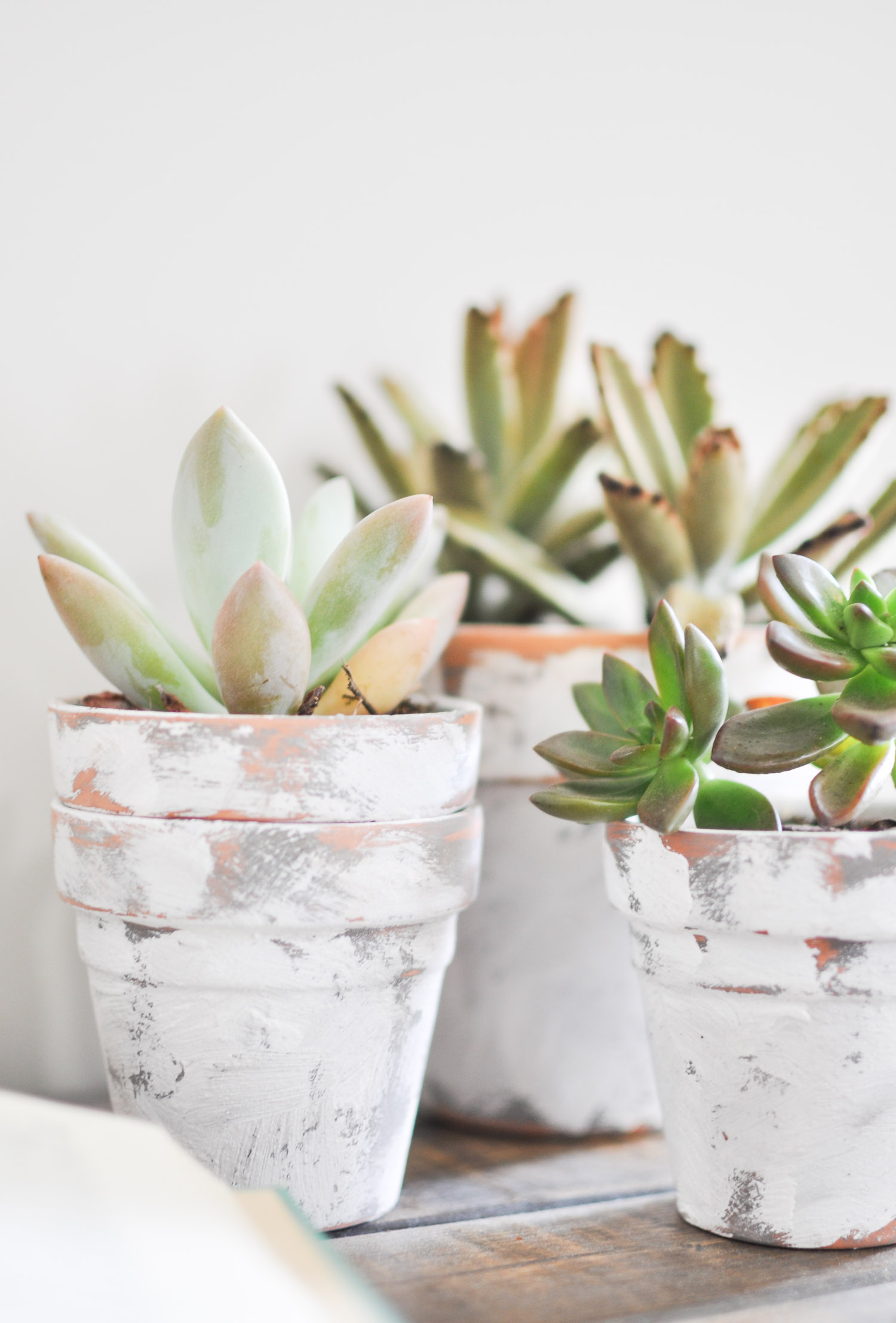 Coastal painted terra cotta plant pots by Cherished Bliss, featured on Funky Junk Interiors