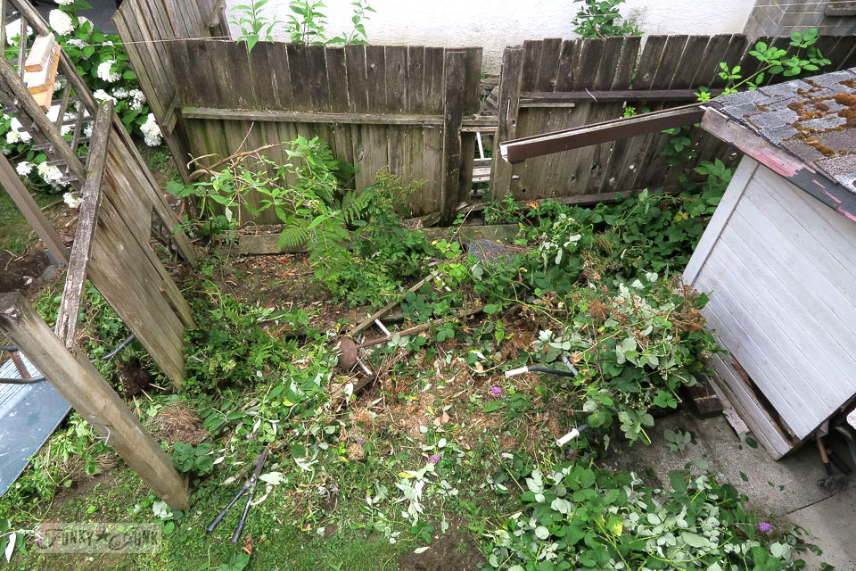 Chopping out wild blackberry bushes from a storage area in the backyard with a reclaimed wood fence | funkyjunkinteriors.net