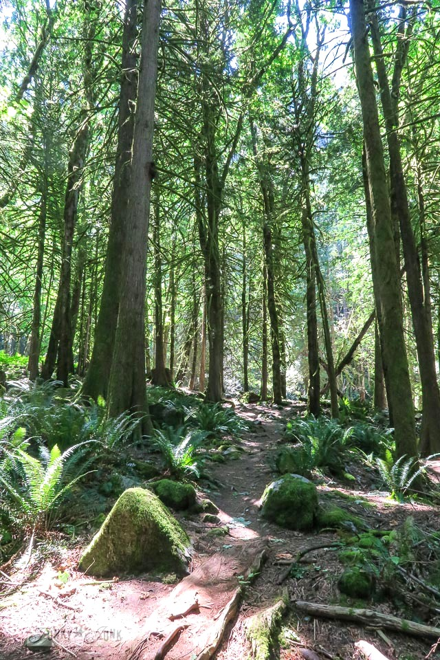 The forest trail leading to Flood Falls in Hope, BC Canada | funkyjunkinteriors.net