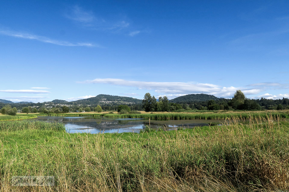 Gorgeous wetlands walking trail at Wilband Creek Park in Abbotsford, BC Canada | funkyjunkinteriros.net