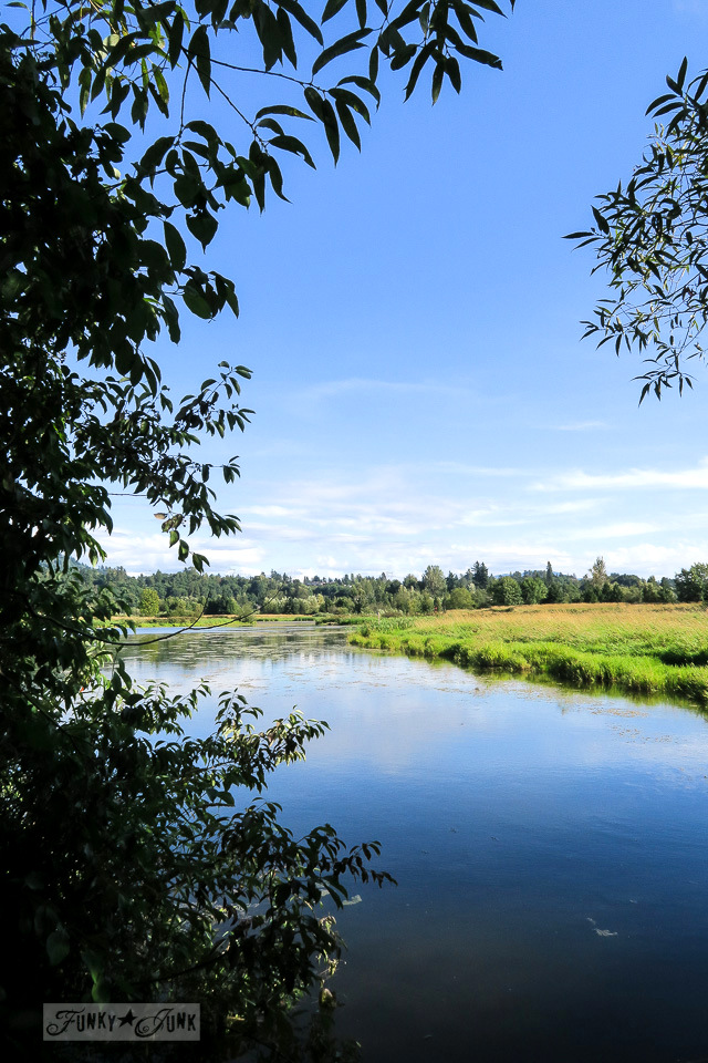 Gorgeous wetlands walking trail at Wilband Creek Park in Abbotsford, BC Canada   funkyjunkinteriros.net