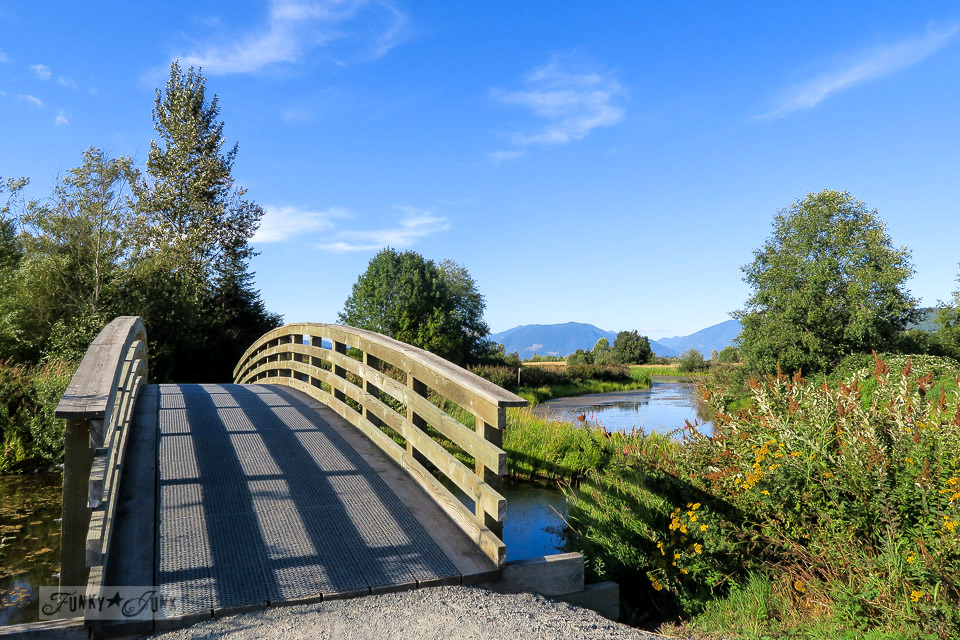 Gorgeous curved bridges over wetlands in the walking trail at Wilband Creek Park in Abbotsford, BC Canada | funkyjunkinteriros.net