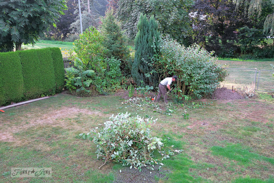 Overgrown flower bed gets pruned and cleared out - before | funkyjunkinteriors.net