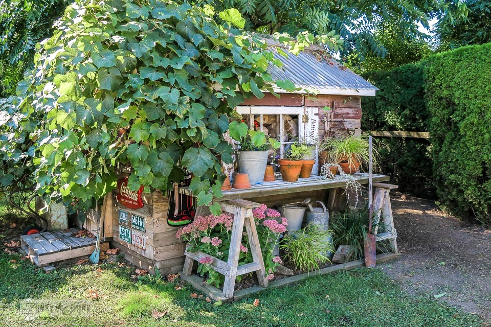 Garden shed with grape vine and plants | funkyjunkinteriors.net