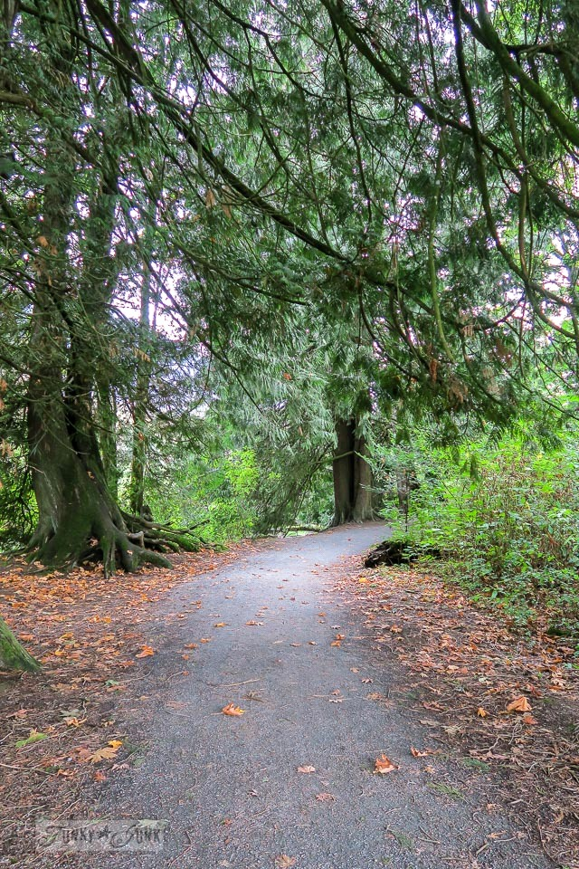 A winding forest path through beautiful Peach Trail in BC Canada funkyjunkinteriors.net