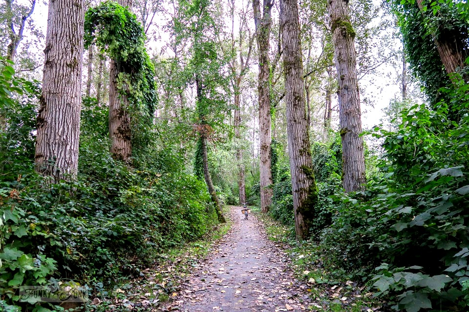 A fall bike ride through BC's own Kauai - welcome to the Vedder Rotary Trail in BC, Canada. This beautiful strip of vine covered forest behind the Blue Heron Reserve will take your breath away... take the tour! funkyjunkinteriors.net