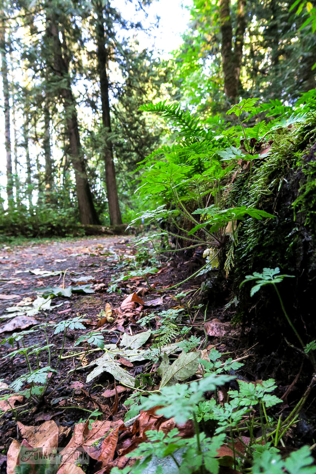 Lush forest greenery during a fall bike ride through the Vedder River Rotary Trail in Chilliwack, BC Canada | funkyjunkinteriors.net