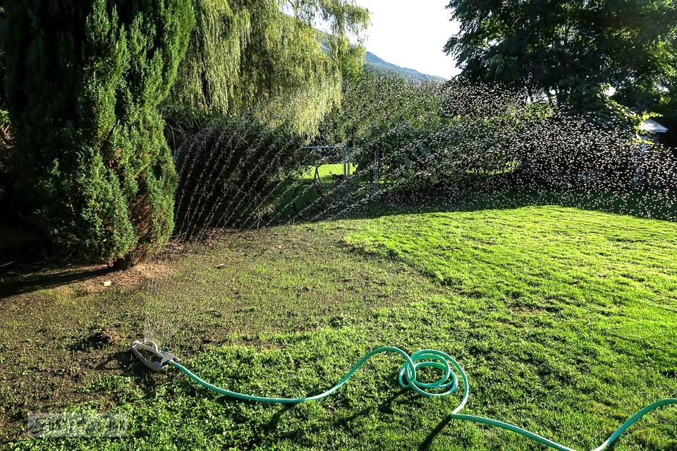 Watering a newly seeded lawn attempting to grow | funkyjunkinteriors.net
