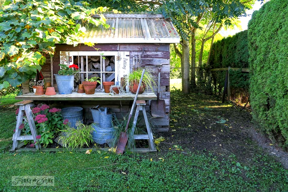 Rustic garden shed beside a newly seeded lawn attempting to grow | funkyjunkinteriors.net