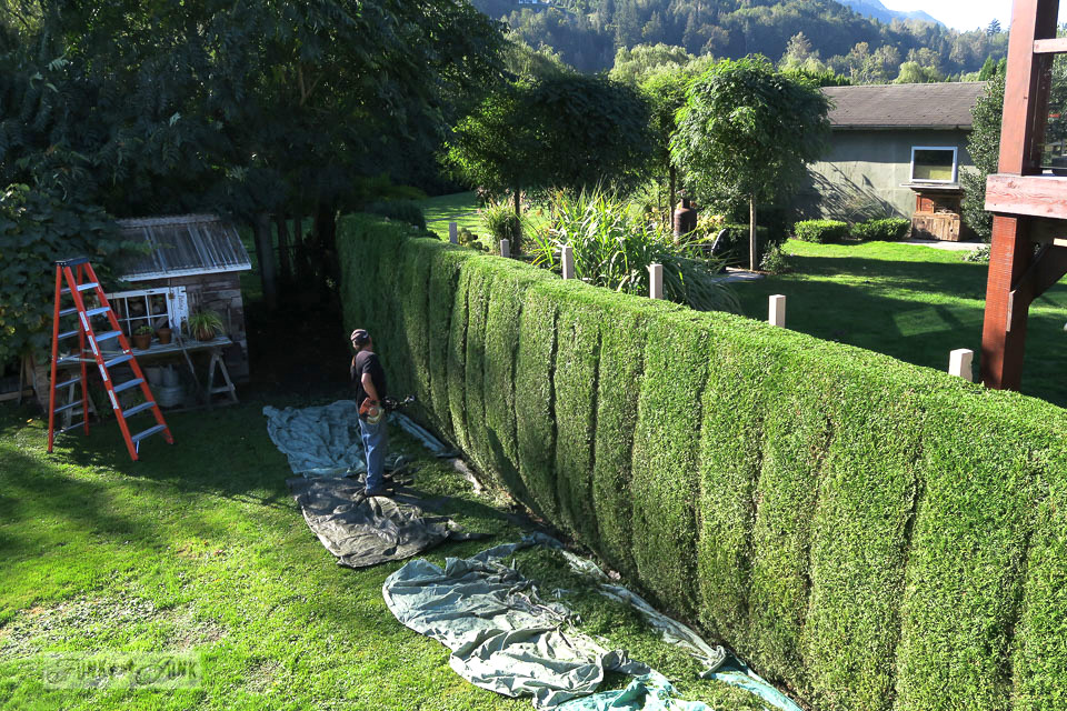 Neatly trimmed hedges with carved joins so the hedge resembles younger trees | funkyjunkinteriors.net