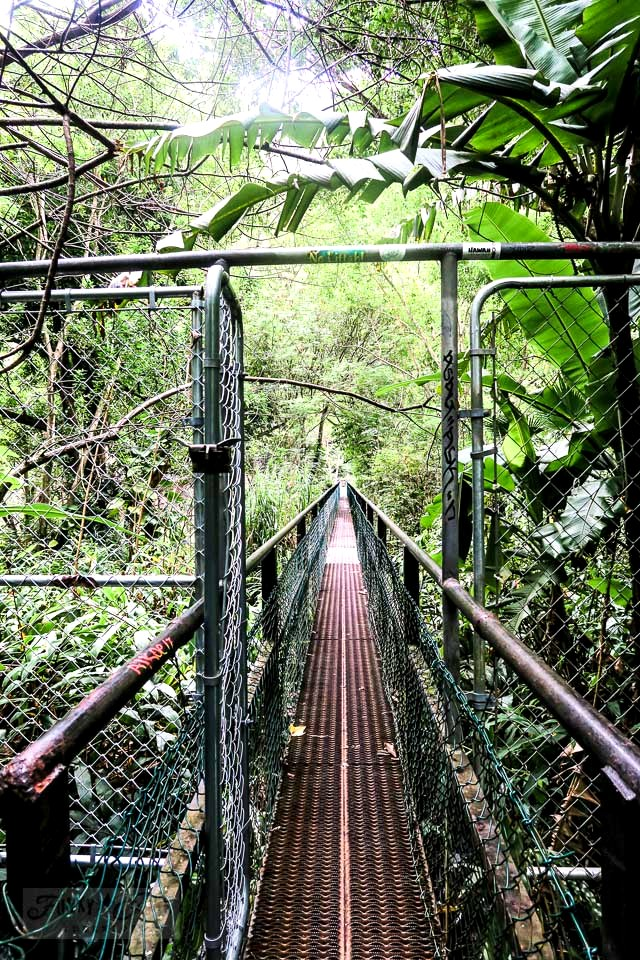 A jungle trail walk through Maui's historic Kepaniwai Park along a long metal bridge leading to the other side of the river. Take the tour! funkyjunkinteriors.net