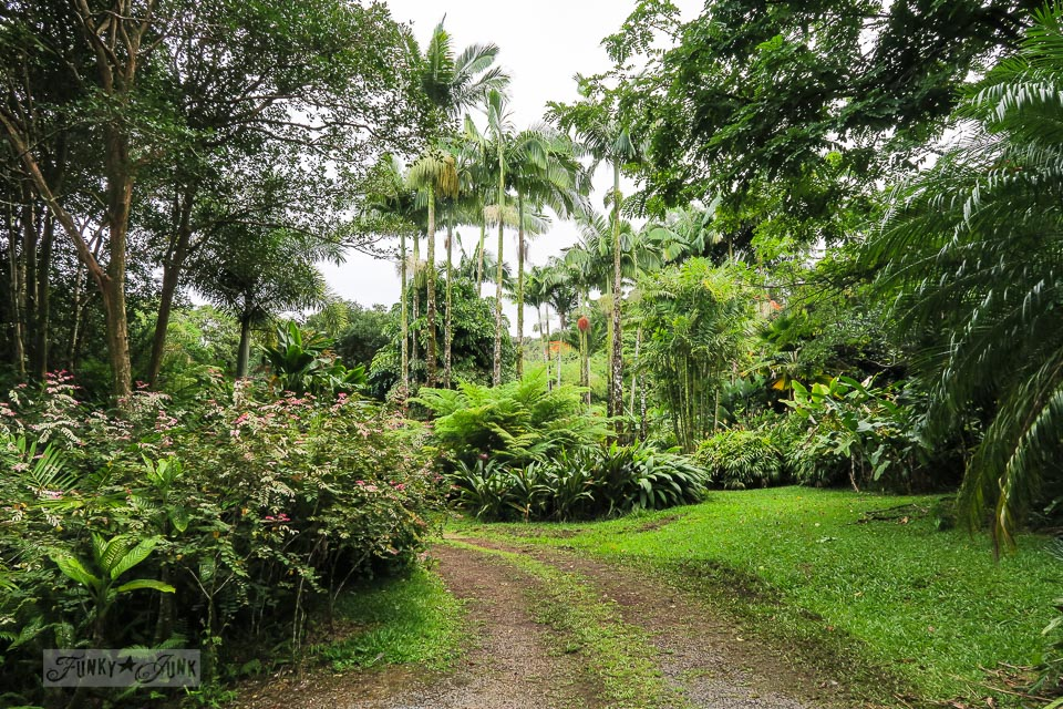 The stunning botanical grounds at the charming and quaint Entabeni Cottage in Nahiku, buried in a tropical forest, part of our Road to Hana adventure in Maui, Hawaii. Read the full story at funkyjunkinteriors.net