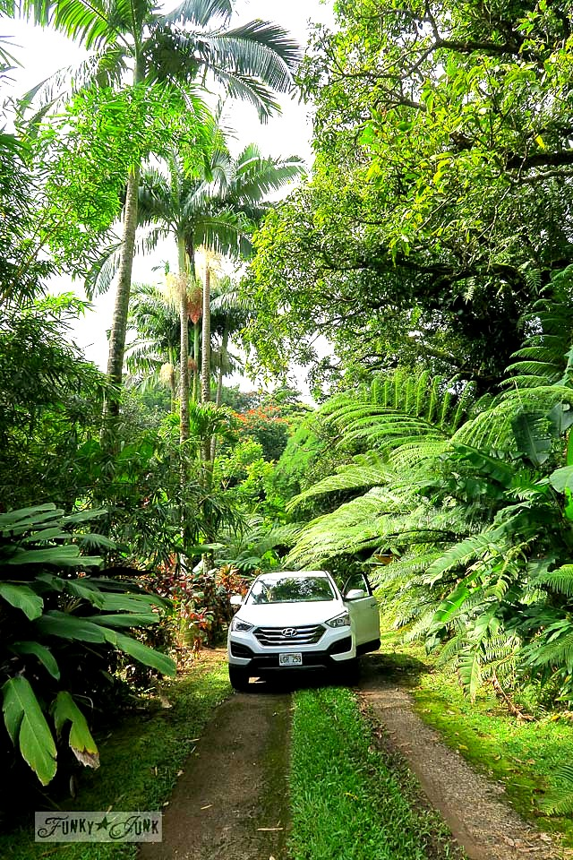 The long jungle forest driveway at Entabeni Cottage in Nahiku, along the Road to Hana adventure. Read the full story at funkyjunkinteriors.net